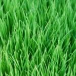5 důvodů proč vyživovat trávník