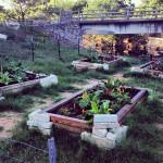 Komunitní zahrady mění česká města