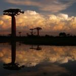 Zajímavé stromy světa – Baobab