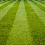 Jak často sekat trávník?