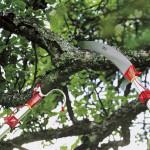 Jak a čím prořezávat větve na vysokých stromech
