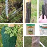 Ochrana stromů proti okusu