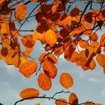 Podzimní údržba okrasných dřevin