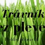Jak vyčistit trávník od plevele
