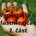 Vypěstujete si vlastní rajčata – 2. část