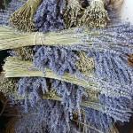 lavender-1253406_640