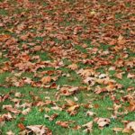 autumn-1677955_640