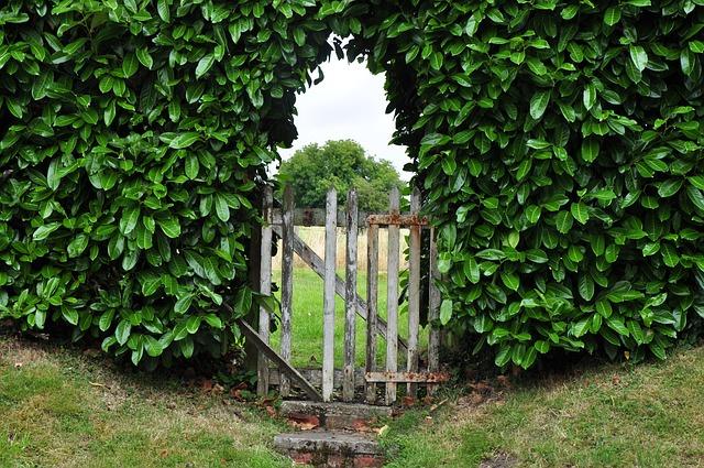 Listnaté dřeviny vhodné pro vysoké živé ploty