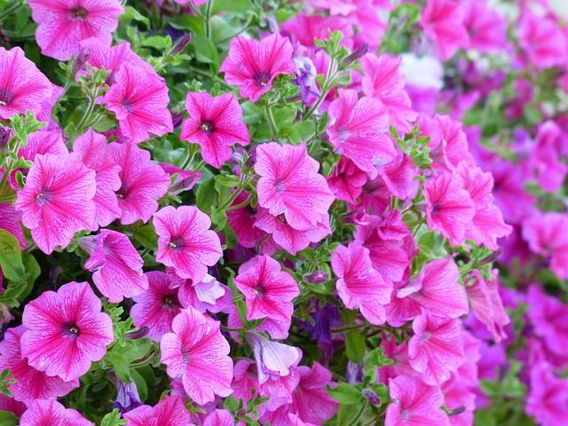 Mýty a fakta o samozavlažovacích květináčích