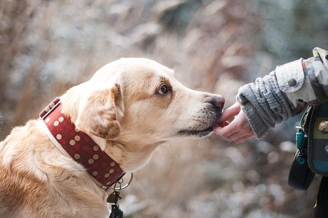 pes, krmivo pro psy