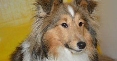 Jak a proč zařazovat do stravy psů nejen mléčné výrobky