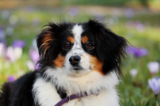 Přírodní antiparazitika pro psy a způsoby jejich aplikace