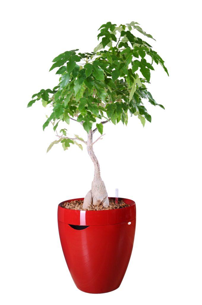 Samozavlažovací květináč Calimera